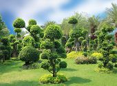 picture of bonsai  - Natural bonsai tree garden Lush green parks - JPG