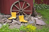 foto of carriage horse  - yellow gardener rubber boots in farm near old horse carriage wheel - JPG