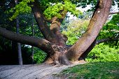 stock photo of fascinator  - stem of oak trees in fascinating light in a park in Vienna - JPG