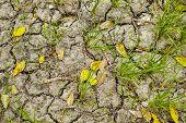 stock photo of mud  - An empty rice field consist of dry mud - JPG
