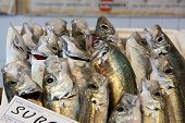 foto of fish  - Many fish for sale in fish market - JPG