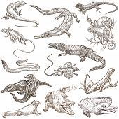 picture of freehand drawing  - LIZARDS  - JPG