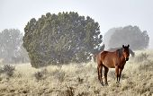 picture of wild horses  - Wild horses standing in fog during the winter - JPG