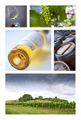 image of french culture  - Viticulture and French wineries on a collage - JPG