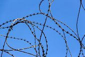 foto of deportation  - a plot of land is covered with barbed wire - JPG