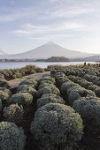 pic of mount fuji  - This photo was shot from the area around Mt - JPG