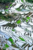 image of ifugao  - Amazing abstract texture of rice terraces fields with sky colorful reflection in water - JPG