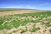 stock photo of plowed field  - View on plowed field with a blue sky background - JPG