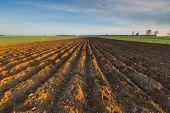 foto of plow  - Plowed field landscape in calm polish countryside - JPG