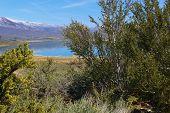 foto of sagebrush  - Mono Lake - JPG