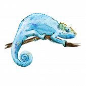 picture of chameleon  - Beautiful vector image with nice watercolor chameleon - JPG