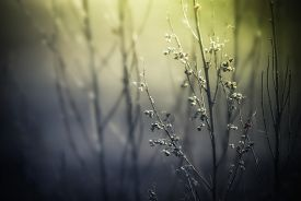 stock photo of dead plant  - Abstract nature background with wild flowers and plants silhouettes at foggy mysterious sunrise - JPG