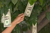 stock photo of tithe  - a person pulls a dollar from a tree - JPG