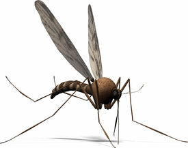 picture of gnat  - a small insect wants your blood don - JPG