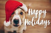 Happy Holidays Text, Seasonal Greetings Card Sign. Dog In Santa Hat.  Cute Brown Dog In Red Hat Sitt poster