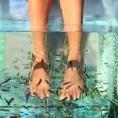 stock photo of fish skin  - Fish spa feet pedicure skin care treatment with the fish rufa garra - JPG
