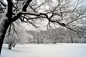 A Snow-covered Oak Branch Hangs Over A Forest Lake Covered With Ice And Fluffy Snow. Winter Landscap poster