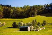 stock photo of feedlot  - summer landscape with wooden barrack - JPG