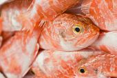 picture of redfish  - Group of redfish displayed in a fish market in italy - JPG