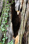stock photo of camphor  - Detail texture view of camphor tree bark - JPG