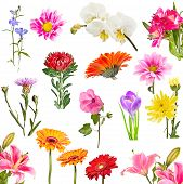 pic of lobelia  - Collage of blooming flowers isolated on white background - JPG
