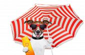 stock photo of sun tan lotion  - summer  sog with umbrella  and a sunscreen - JPG