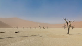 picture of sandstorms  - Sandstorm in Deadvlei with some of the highest sand dunes in the world and dead acacia trees - JPG