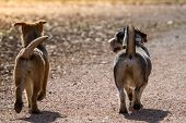 foto of mongrel dog  - Two dogs run together with stationary rod carefully along a path the dogs move away from the photographer - JPG