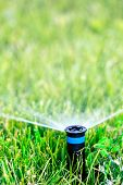 pic of sprinkler  - Automatic sprinkler head spraying water on green lawn - JPG
