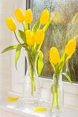 Bright yellow tulips in vintage glass bottles in window