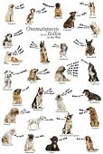 Composition of dog barking onomatopoeias from the world, German version