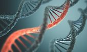 picture of double helix  - Long structure of the DNA double helix in depth of view - JPG