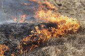 stock photo of dry grass  - Fire On Dry Grass - JPG