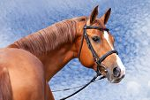 picture of horses ass  - Portrait of Russian Don horse against sky - JPG