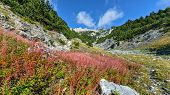 stock photo of olympic mountains  - Beautiful valley of Olymp mountain in Greece - JPG