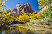 stock photo of virginity  - virgin river reflection in Zion National Park - JPG