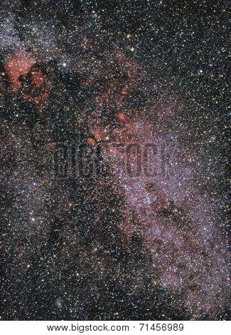 Постер, плакат: Cygnus Constellation, холст на подрамнике