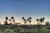 stock photo of mesopotamia  - Sunrise on El Palmar National Park (Parque Nacional El Palmar) one of Argentina