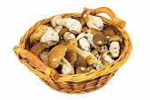 image of porcini  - Porcini in basket penny bun in basket on white background - JPG