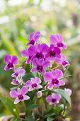 picture of orquidea  - Purple orchid flower - JPG