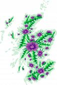 foto of scottish thistle  - Vector image background map of Scotland with thistle flowers - JPG