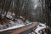 stock photo of backwoods  - Road makes a turn among the snowy winter forest - JPG
