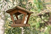 stock photo of bird-nest  - bird feeder and nest among olive trees - JPG