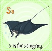 image of stingray  - Flashcard letter S is for stingray - JPG