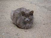 picture of homeless  - Homeless gray cat with yellow eyes on the pavement - JPG