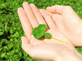 picture of four leaf clover  - Hand holding four leaf clover on green nature background - JPG