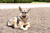 picture of stray dog  - Stray dog - JPG