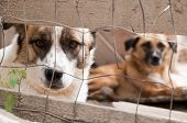 picture of sad dog  - Stray dog with a sad look behind the corral of a dog refuge - JPG