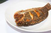 foto of plate fish food  - Fried big tilapia fish on white plate - JPG