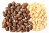 picture of pine nut  - Pine nuts  - JPG